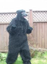 black-bear-008