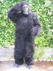 Bert the Gorilla